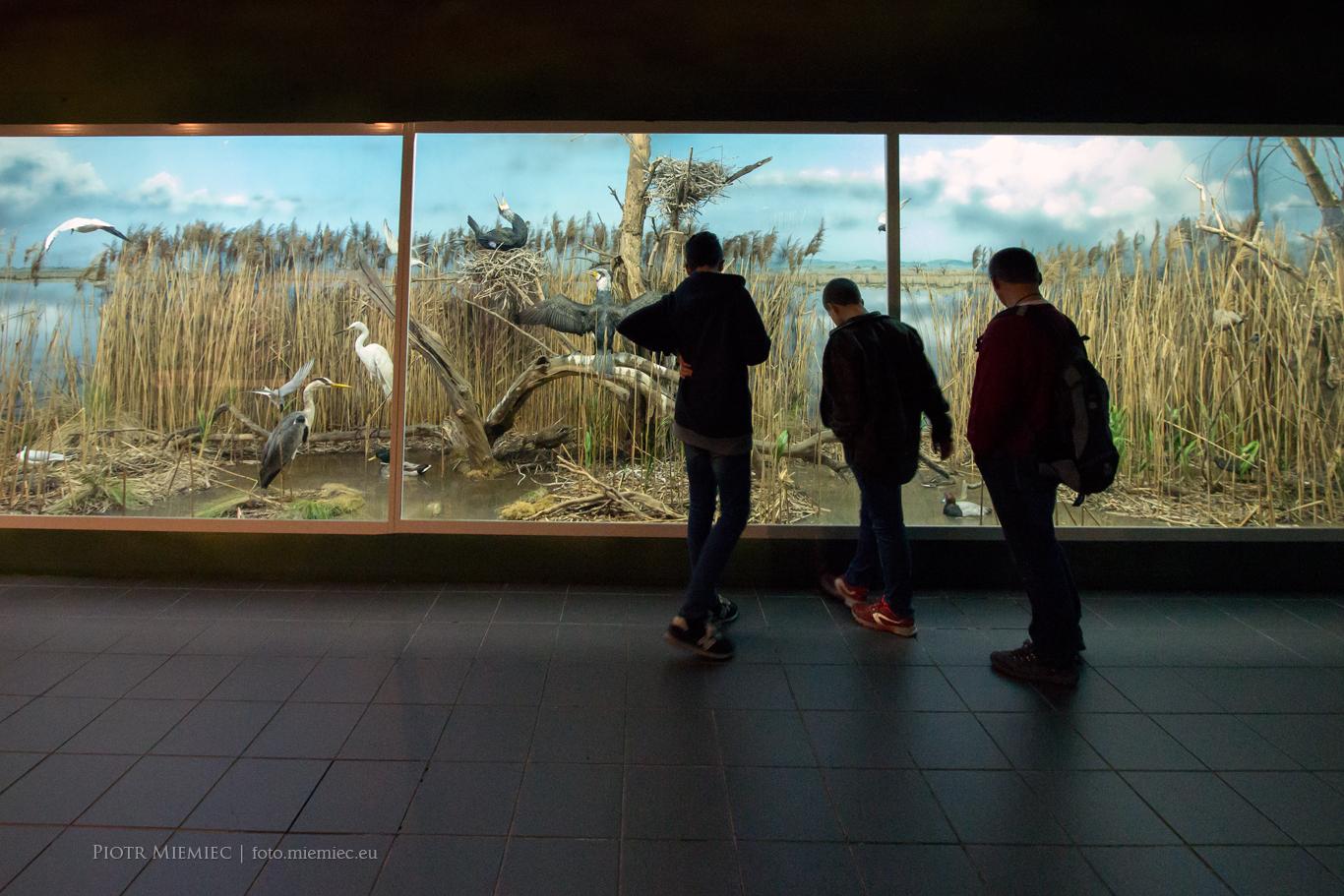 Wystawa - Przyroda Górnego Śląska. Lasy, wody i mokradła