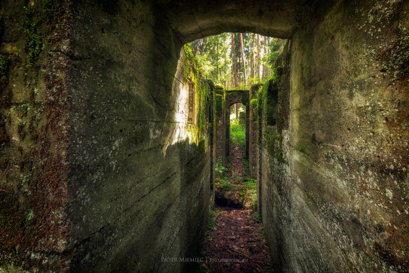 Ruiny w środku lasu