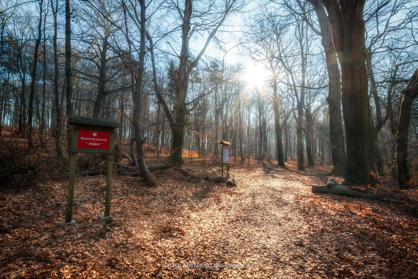 Rezerwat buków Segiet w Bytomiu