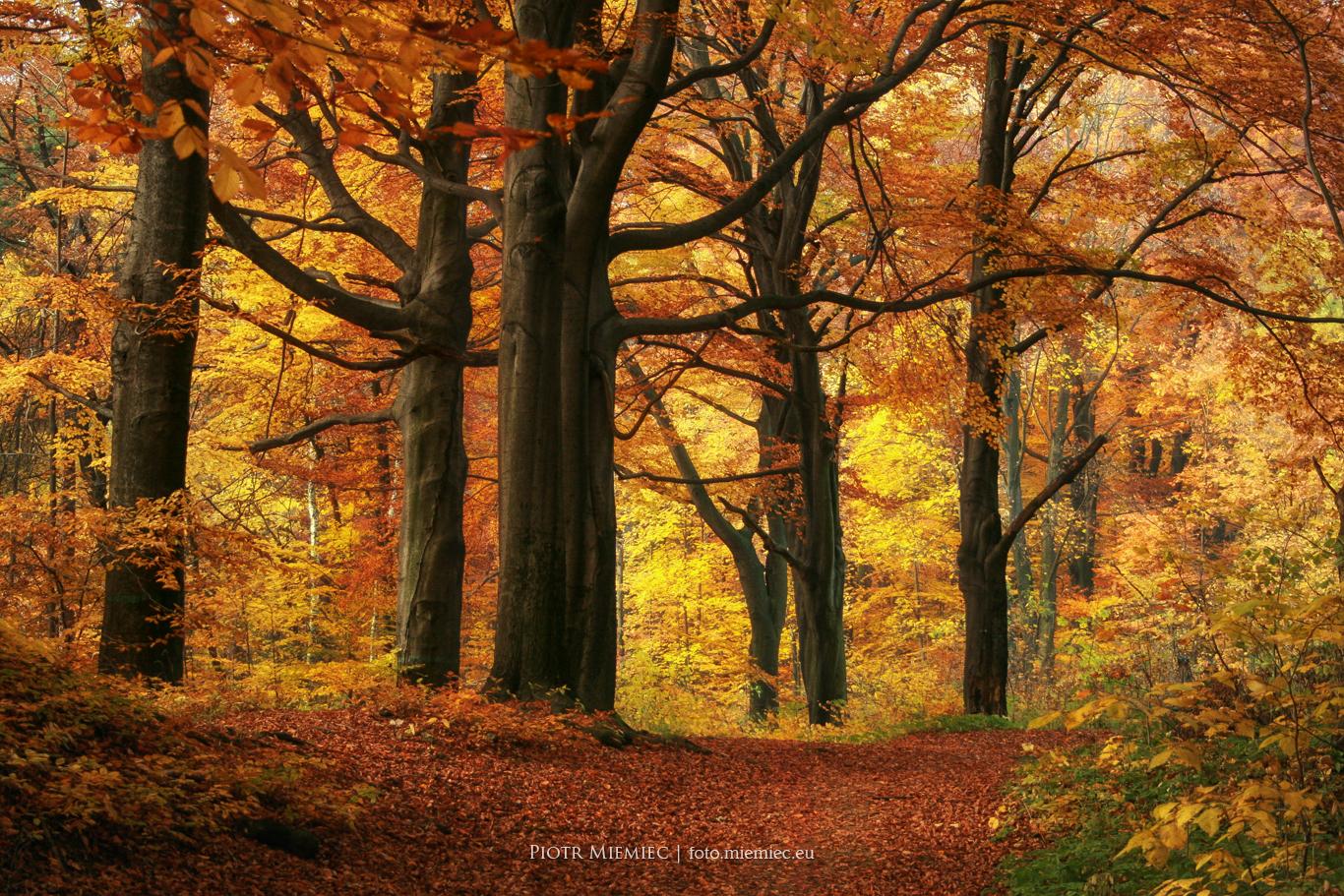 Jesień w Segiecie