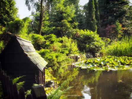 Ogród w Bujakowie – 2006