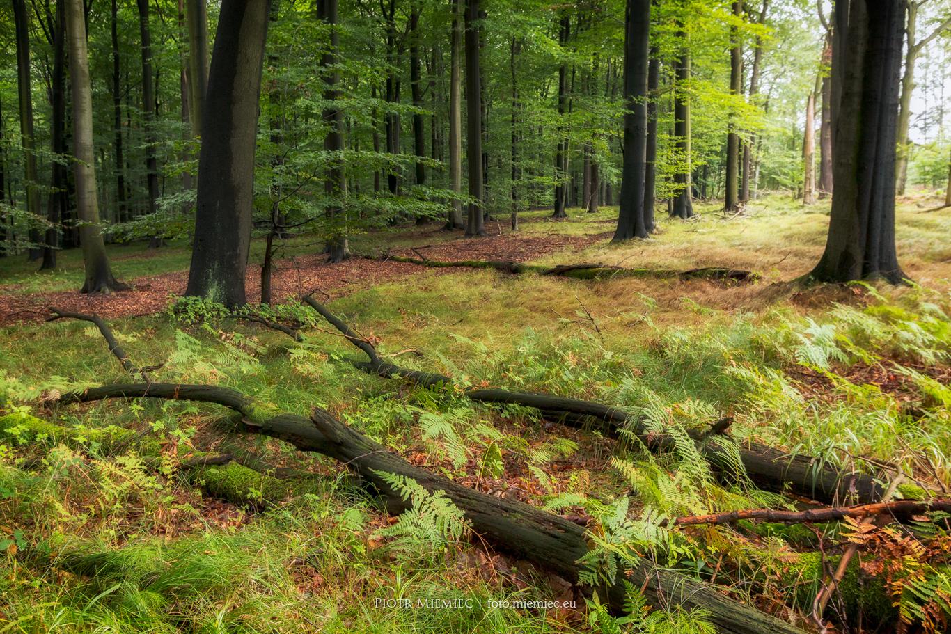 Lasy Murckowskie