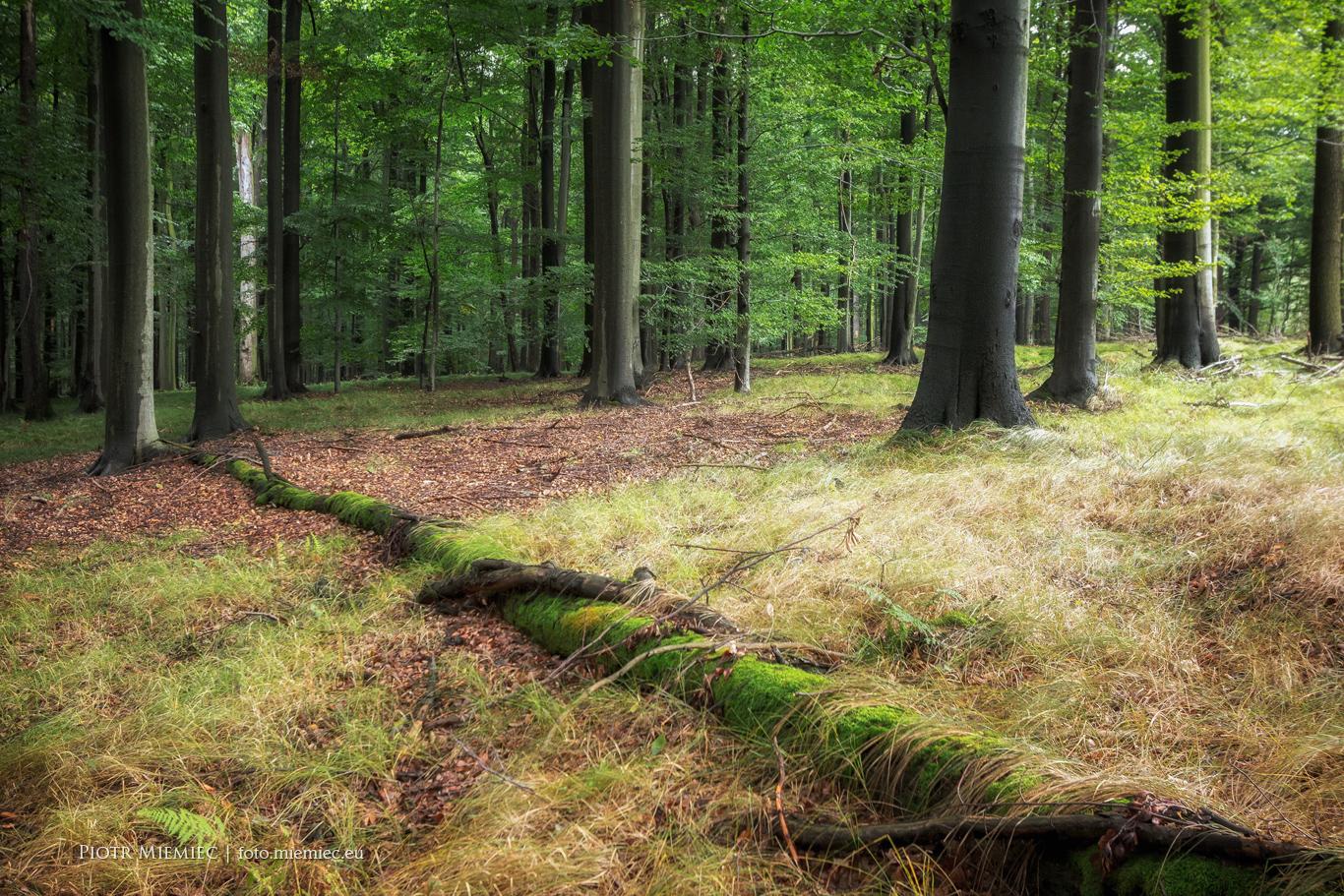 Lasy Murckowskie 3