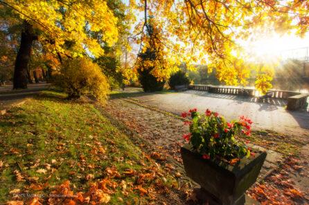 Jesień w Parku Śląskim