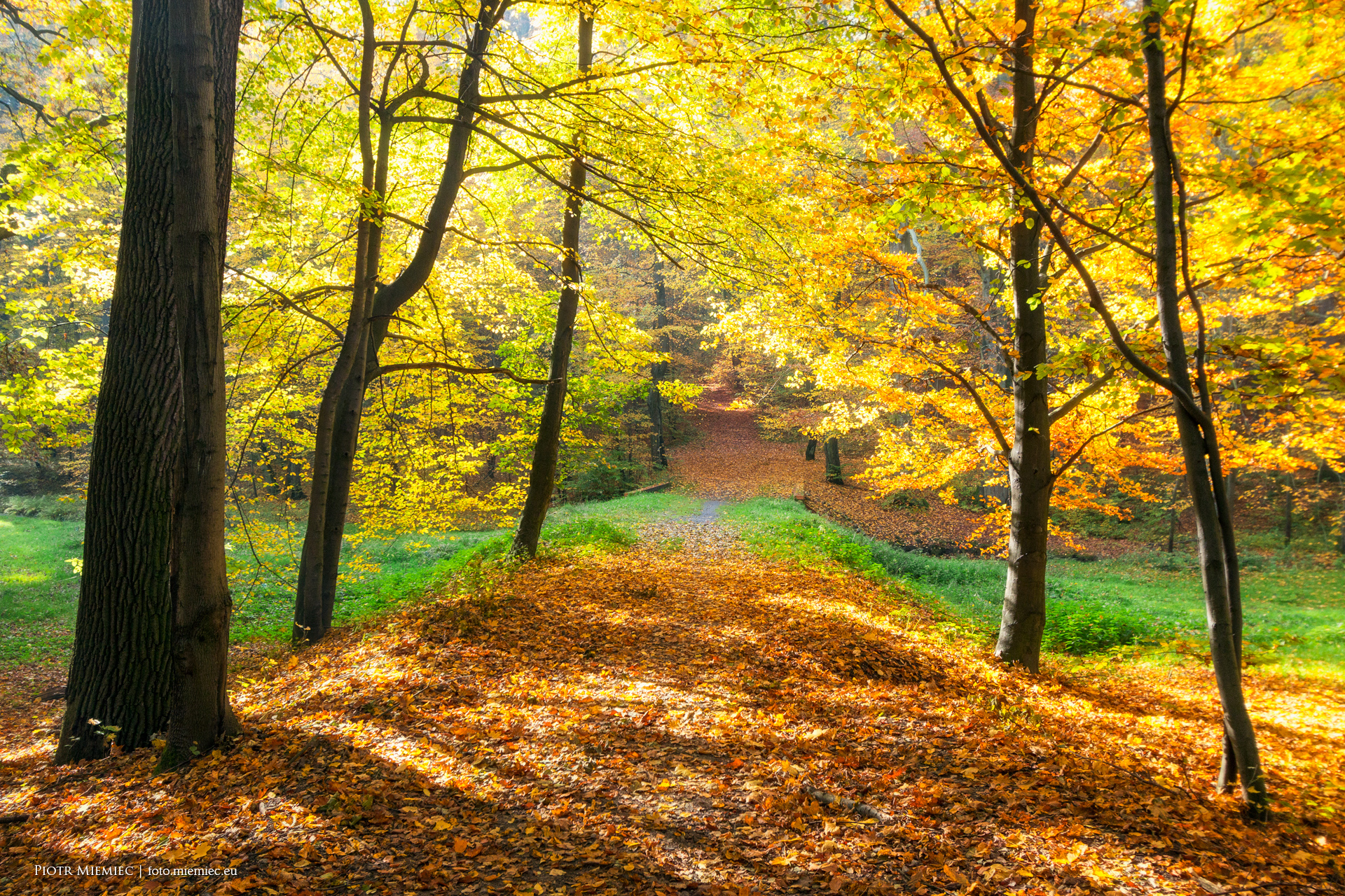 Park Repty jesień