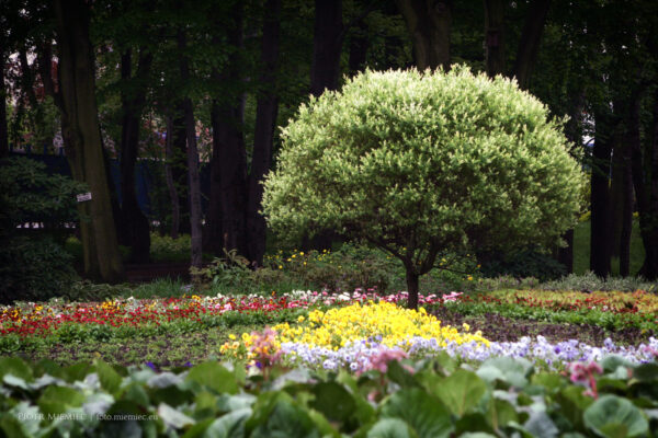 Ogród Botaniczny w Zabrzu – maj 2010