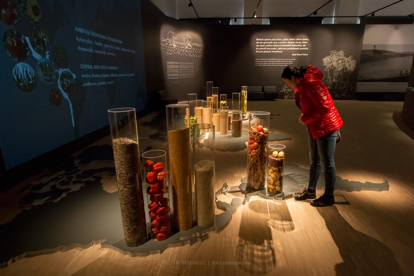 Muzeum Śląskie – Zaczęło się od ziarna