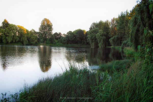 Mikulczyckie stawy – czerwiec 2005