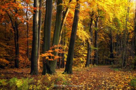 Miechowicki las – październik 2011
