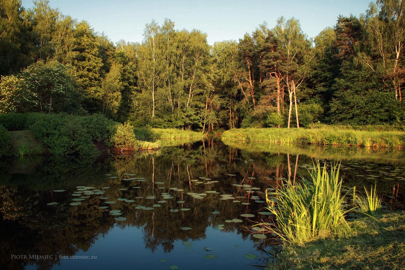 Zalew Pniowiec w Tarnowskich Górach