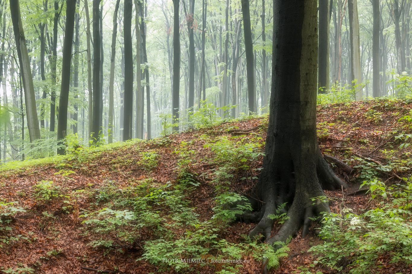 Rezerwat Segiet IMG_8564