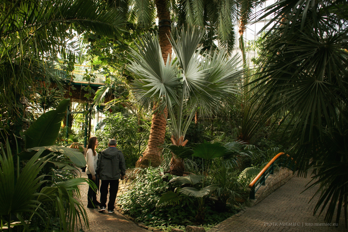 Gliwice palmiarnia