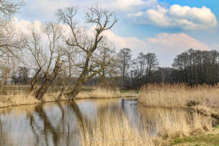 Rzeka Kłodnica – marzec 2015