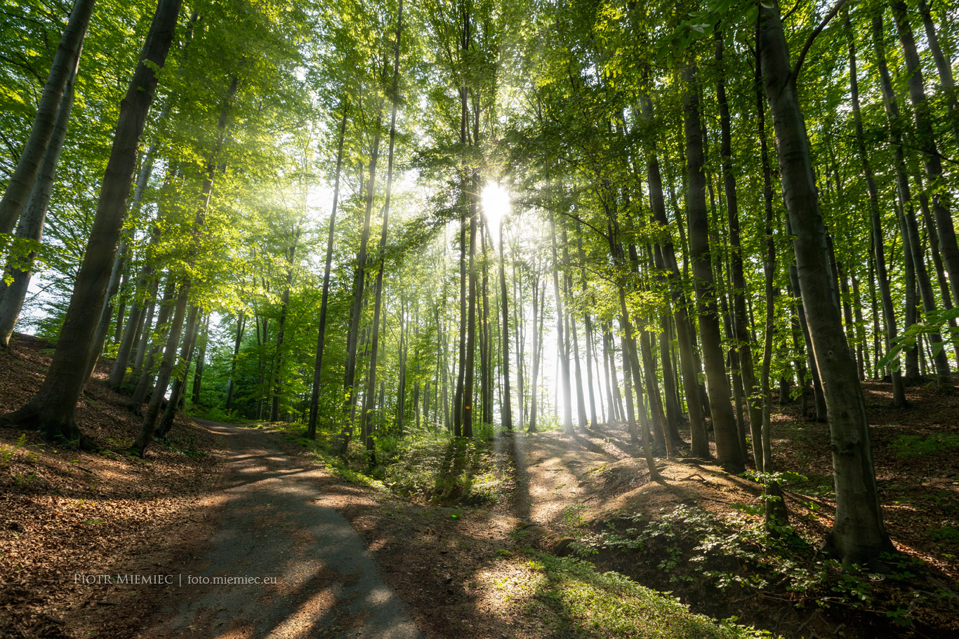 Las w Rudzicy