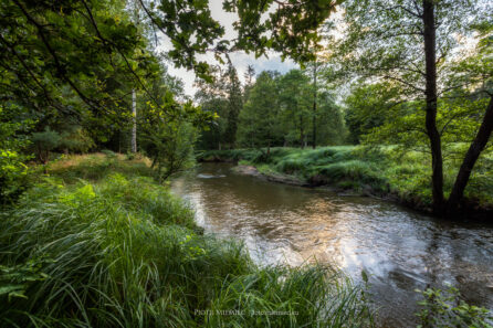 Rzeka Ruda