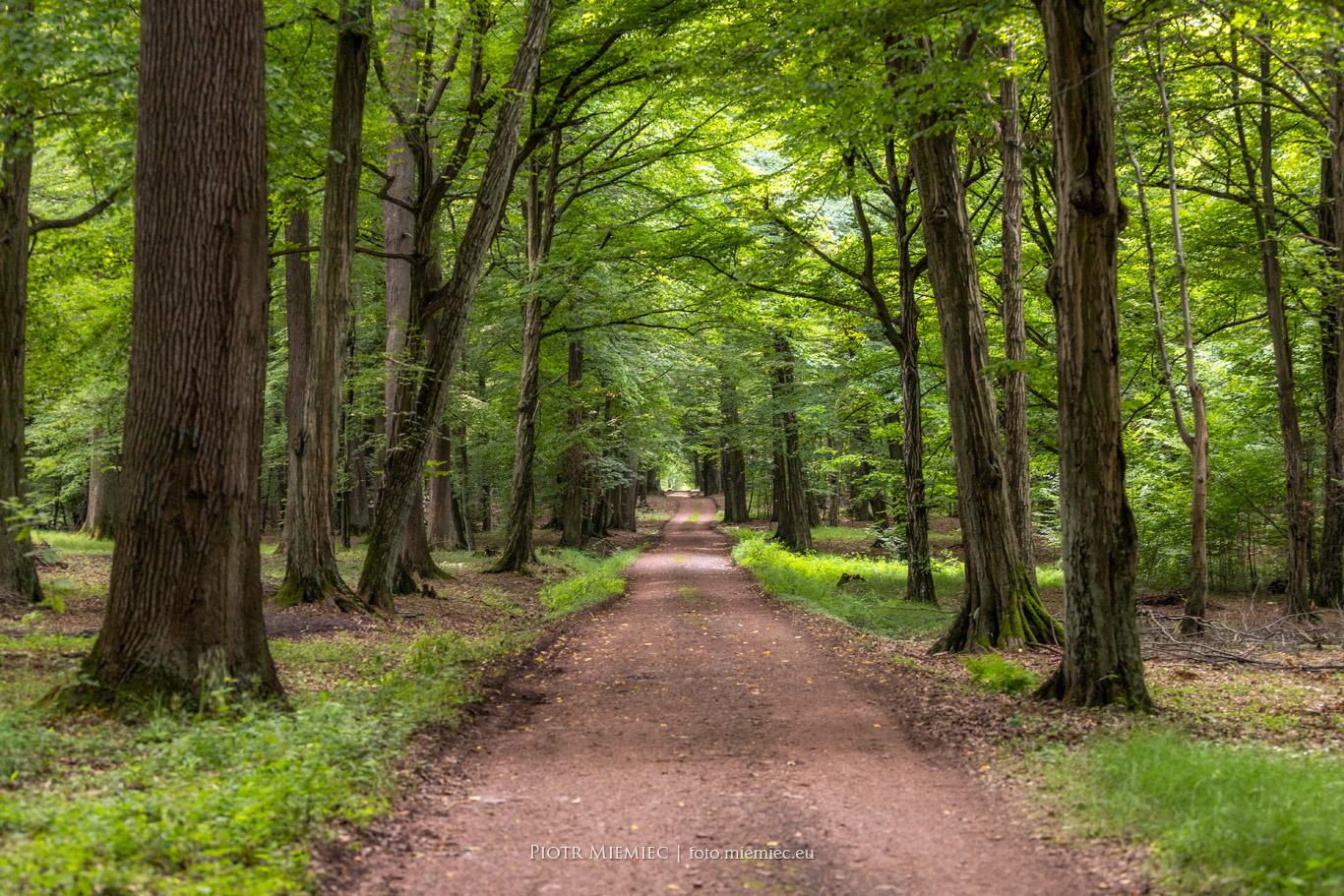 Rudzkie lasy