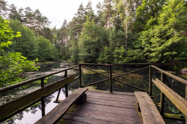 Rudzkie lasy – Uroczysko Hubertus