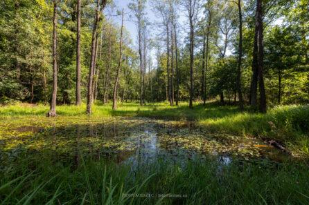 Lasy Murckowskie – źródła Kłodnicy