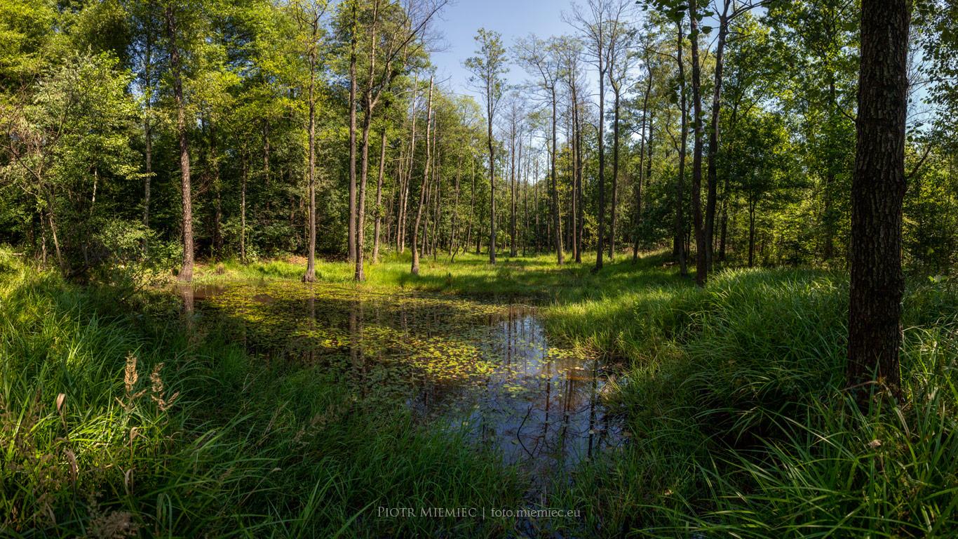 Lasy Murckowskie źródła Kłodnicy