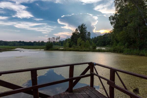 Staw Brzoza w Pawełkach