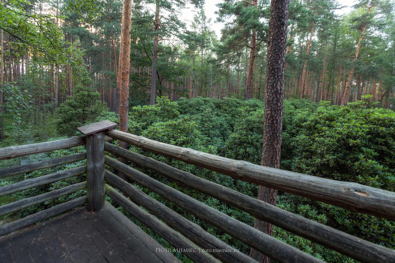 Ogród Rododendronów w środku lasu