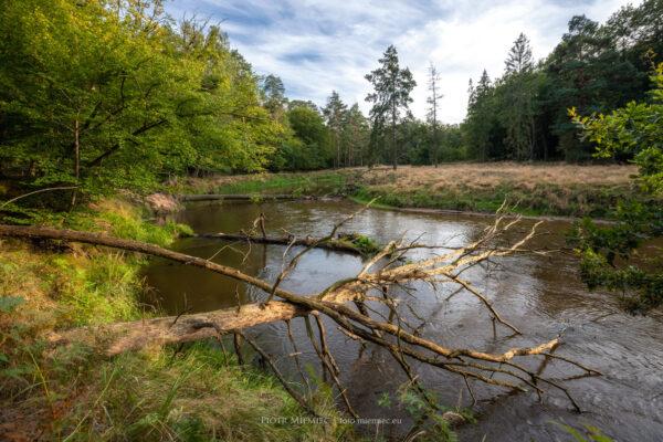 rzeki na śląsku Mała Panew Zawadzkie
