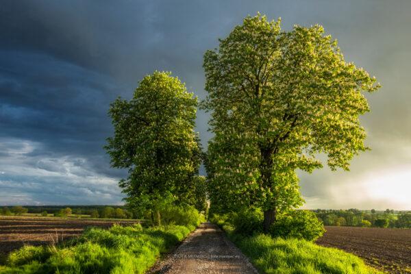 Słońce, deszcz i okolice Toszka